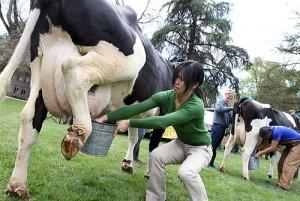 cow-milkingW
